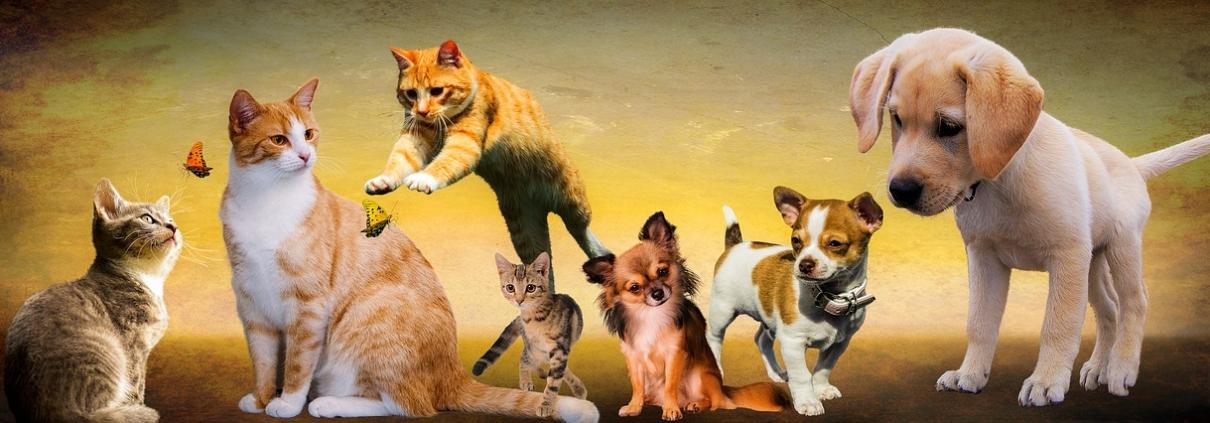 Chiens et chats après avoir pris de l'huile de CBD pour animaux