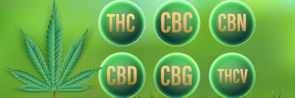 Les cannabinoïdes majeurs CBD, THC, CBC, CBN, CBG, THCV