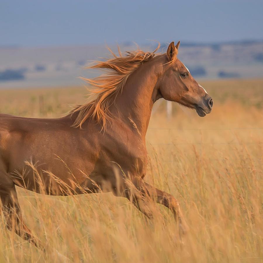 Chanvre Actif Plus pour cheval