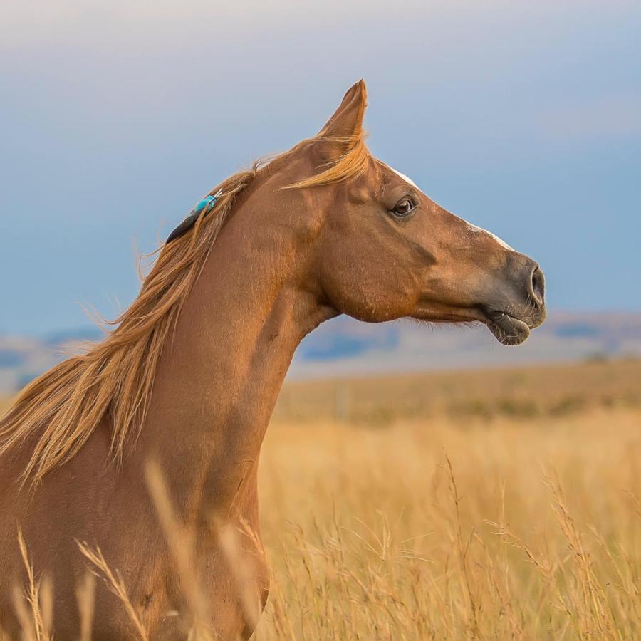 Chanvre Actif pour cheval